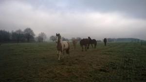 konie6